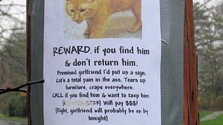 16 Brilliant and Hilarious #Missing_Cat #Posters http://ibeebz.com