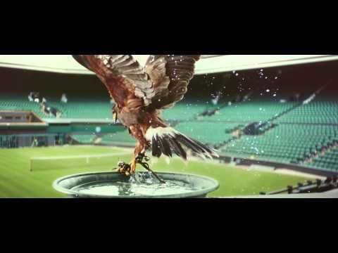 Perfectionists: Rufus - The Real Hawk-Eye | Stella Artois UK: Hawk who keeps the pigeons off the court at Wimbledon.