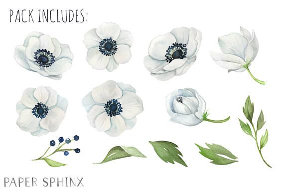 Watercolor Anemone Flowers Clipart White Wedding Flowers Etsy White Wedding Flowers Anemone Flower Anemone
