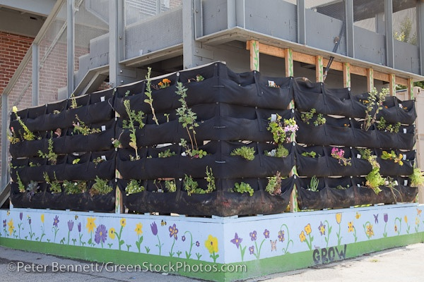 Pin by taylor murphy on vertical gardens pinterest for Recycled building materials los angeles