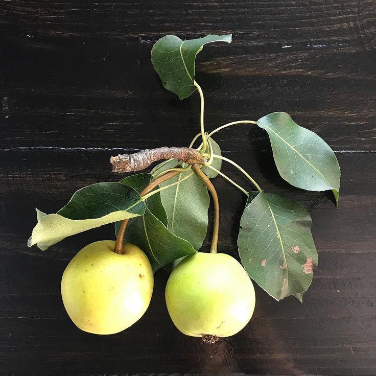 Bir mucize eseri ofiste hepimizin bahçesi var. Her gün biri evden getiriyor meyve tabağımızı... Organiğin dibine vurduk; bugünkü elma ve armutlar bizden