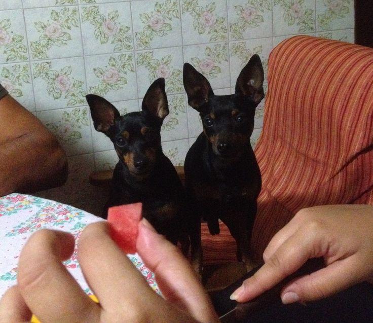 Zoe e Iago golosissimi d'anguria