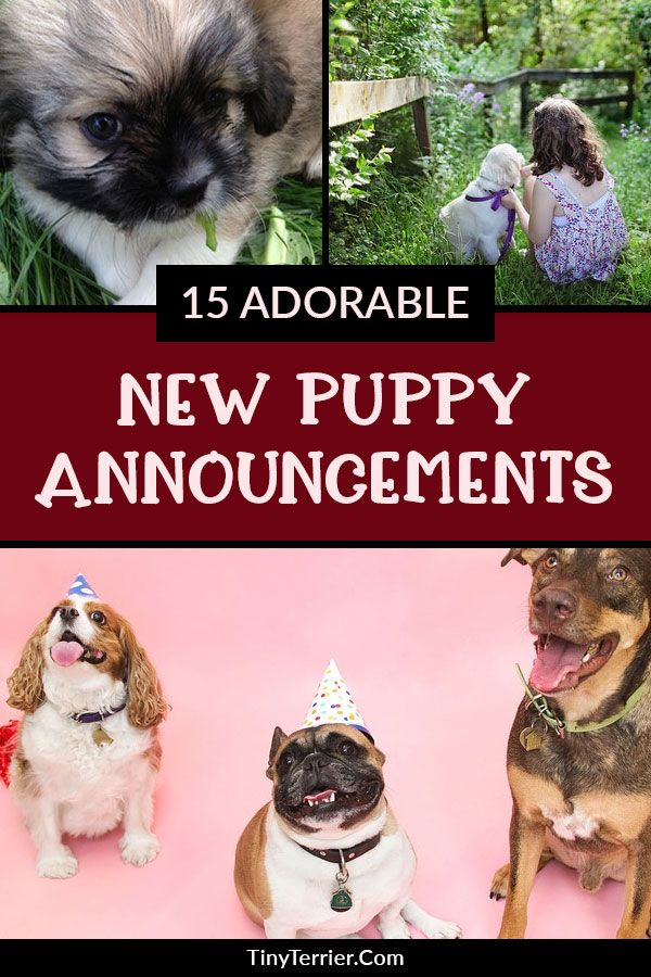 15 Adorable Puppy Announcement Ideas Cute Puppies Puppies Dog