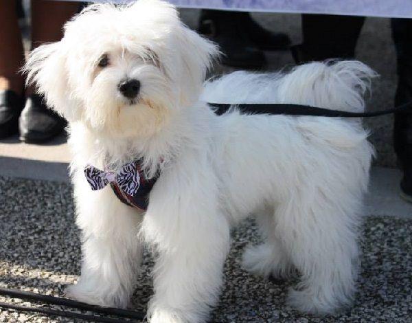 Massacrato per i cani, rischia di perdere un occhio - http://www.sostenitori.info/massacrato-cani-rischia-perdere-un-occhio/255209