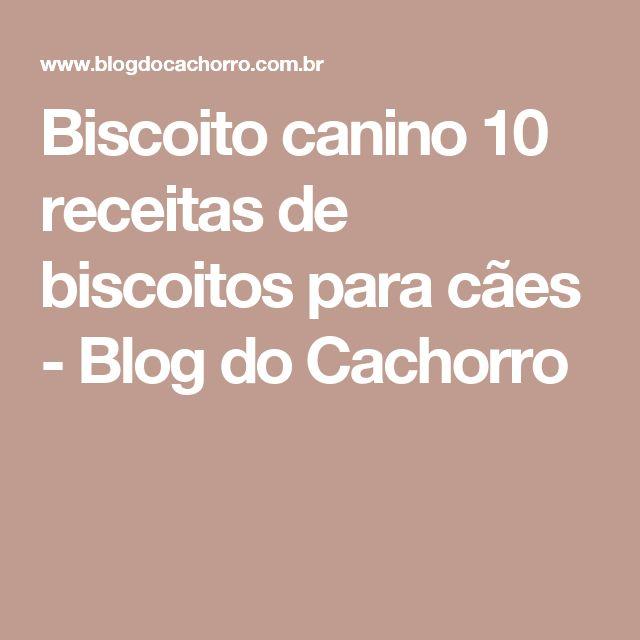 Biscoito canino 10 receitas de biscoitos para cães - Blog do Cachorro