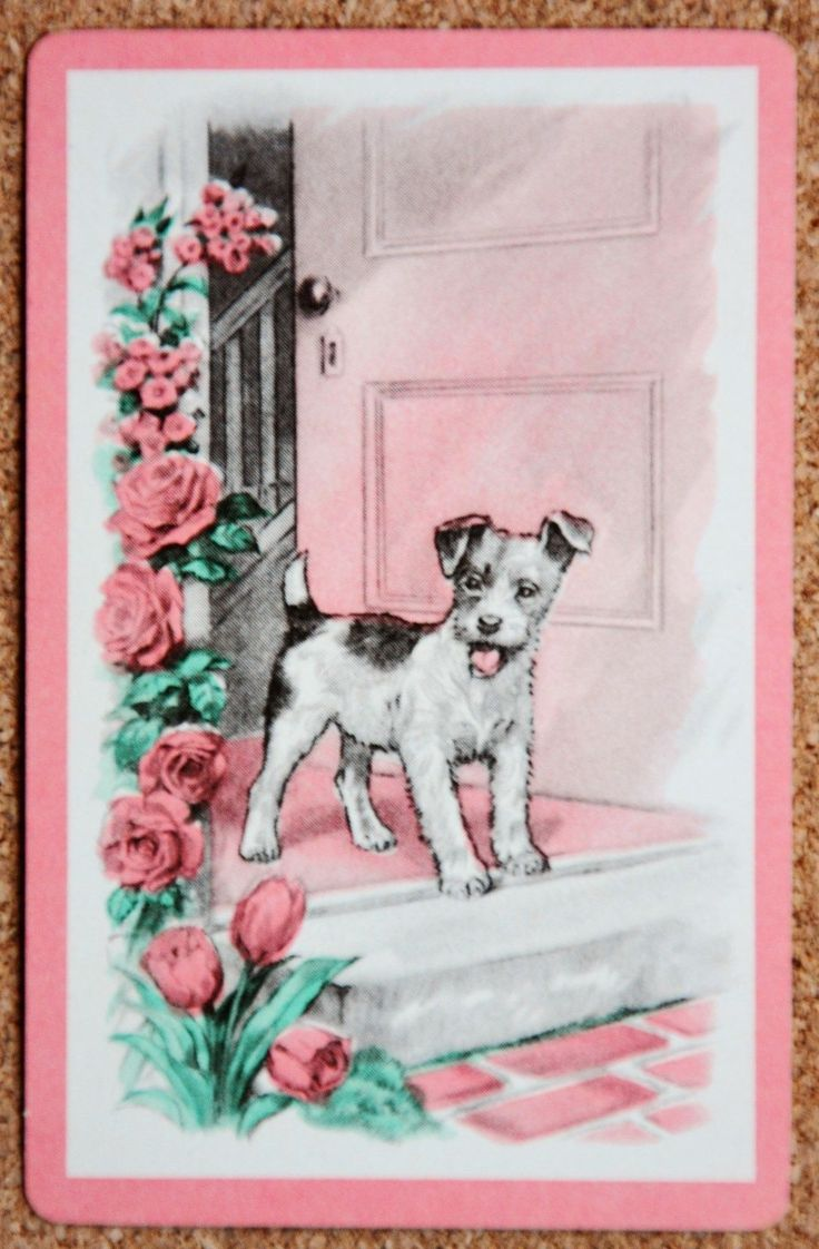 Dog - Terrier At The Front Door -  Vintage Deco Single Swap Playing Card FOR SALE • $1.88 • See Photos! Money Back Guarantee. single vintage deco swap/playing card (not deck) excellent/mint condition Lovely little Terrrierat his front door with roses pink/apricot border and roses ~~~~~~~~~~~~~~~~~~~~~~~~~~ *Payment in Australia Internet banking/direct deposit into my 391762432220