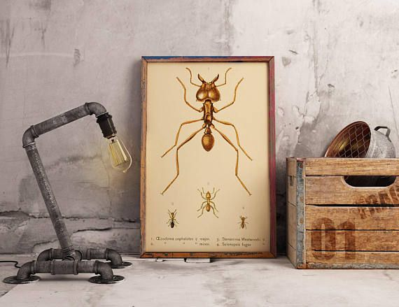 Ant Poster Vintage Ant Science Print Insects Wall Decor