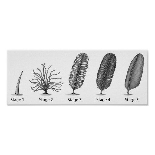 =>Sale on          Feather Evolution Print           Feather Evolution Print in each seller & make purchase online for cheap. Choose the best price and best promotion as you thing Secure Checkout you can trust Buy bestShopping          Feather Evolution Print please follow the link to see f...Cleck Hot Deals >>> http://www.zazzle.com/feather_evolution_print-228487941489065703?rf=238627982471231924&zbar=1&tc=terrest