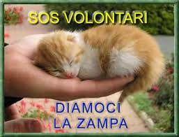Le cronache animali: News - A.A.A. Cercasi volontari per I Gatti di Tor...