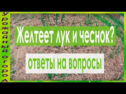 САМЫЙ ЛУЧШИЙ И ПРОСТОЙ СПОСОБ БОРЬБЫ С МУРАВЬЯМИ!!! - YouTube