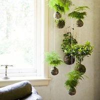 家の中に小さな庭を。インテリアにグリーンを取り入れよ♪