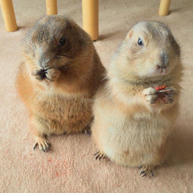 646 Best Small Animals Images On Pinterest Animals Wild