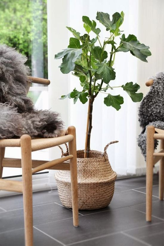How to dress up your plants - via @ilariafatone image by @fridaramstedt