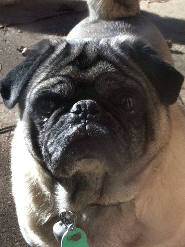 Pugsley from Oklahoma is home!