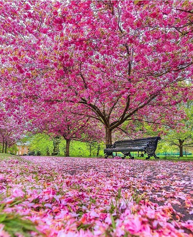 Travel The World Llbogyalv3l Albotravel Instagram Photos And Videos Beautiful Gardens Greenwich Park Spring Scenery