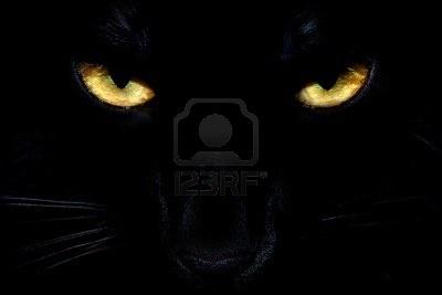 Occhi di gatto nero selvatico