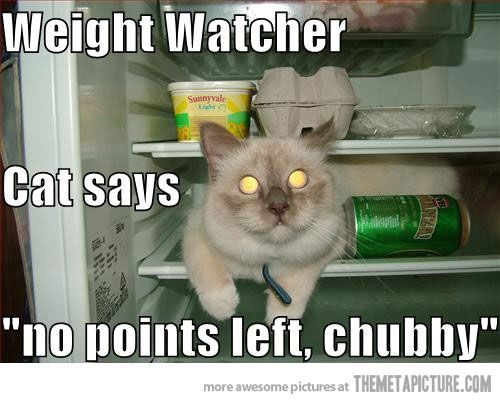 Weight watcher cat…really?Diet Motivation, Motivation Sayings, Funny Pictures, Weights Watchers, Fat Cat, Funny Quotes, Humor Quotes, Cat Lovers, Weights Loss