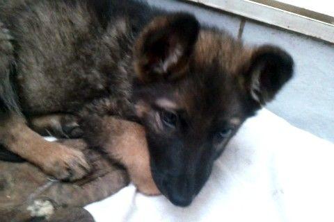 My cutie dog <3