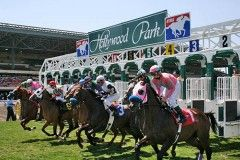 Horses break from the gate at Hollywood Park