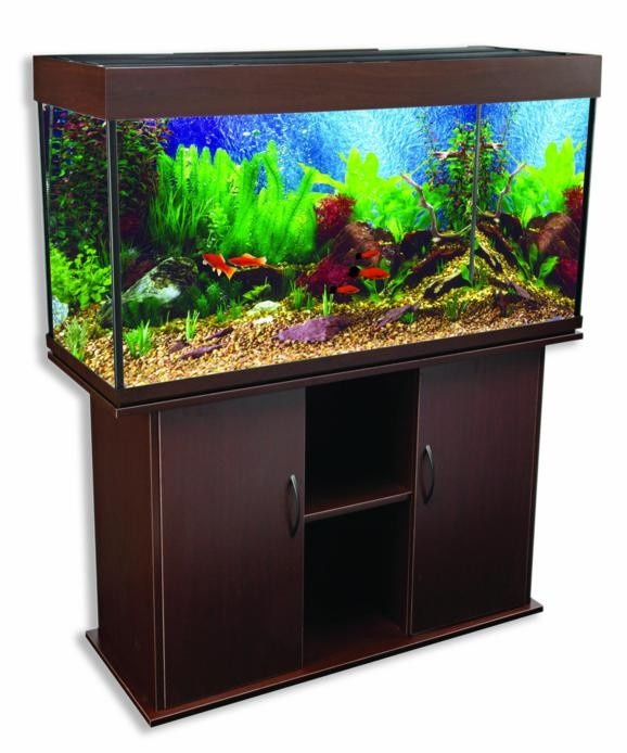 17 best images about cool fish tanks on pinterest coffee for Cool fish tank