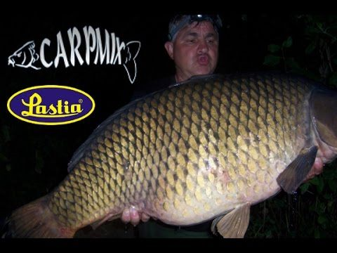 Autumn carp fishing video clip  with big carp, catched