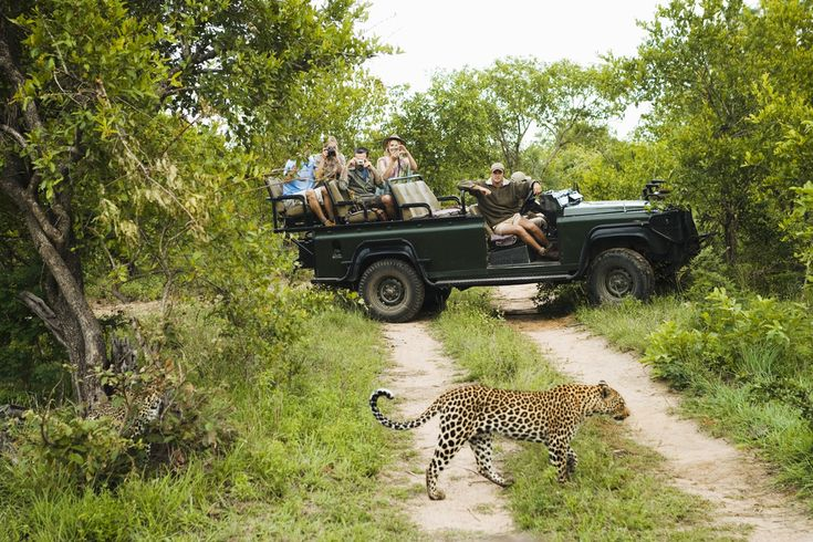 read: http://www.holidaybug.co.za/game-drives-an-exciting-experience-for-wildlife-enthusiasts/
