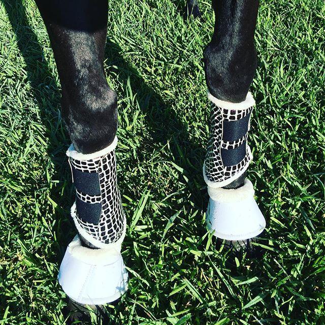 #Reptile #hufglockenau #dressage #equestrian #dressage #matchymatchy #pferd