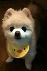 shunsuke dog - Google Search