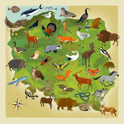 Fauna Polski, mapa występowania zwierząt chronionych, przyroda i zoologia. Kapitan Kamikaze - Adam Pekaloski Map of Polish wildlife