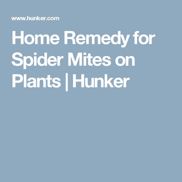 Best 20 Spider Mites Ideas On Pinterest Insect