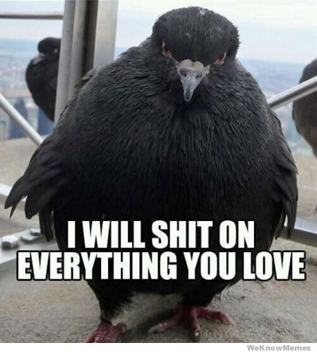 i-will-shit-on-everything-you-love: Laughing, Funny Shit, Funny Pictures, Hate Birds, Funny Stuff, Funnies, Humor, Angry Birds, Animal
