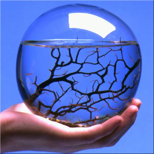 EcoSphere is a self-sustaining ecosystem, you never have to feed the life within. Simply provide your EcoSphere with a source of indirect natural or artificial light and enjoy this aesthetic blend of art and science, beauty and balance.: Idea, Life, Self Sustaining Ecosystem, Closed Ecosystem, Terrarium, Indirect Natural, Science