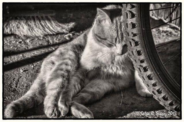 SALVAFOTO: Gato