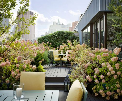 Perfect colour scheme! The Potted hydrangeas take me right back to the country side - another dream rooftop garden!