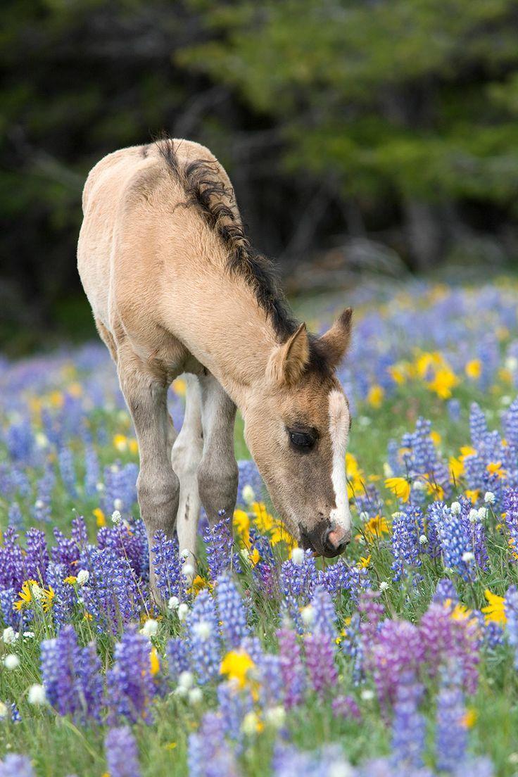 Foal in a field of flowers