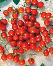 What Can I Do With All These Cherry Tomatoes? Good Questions