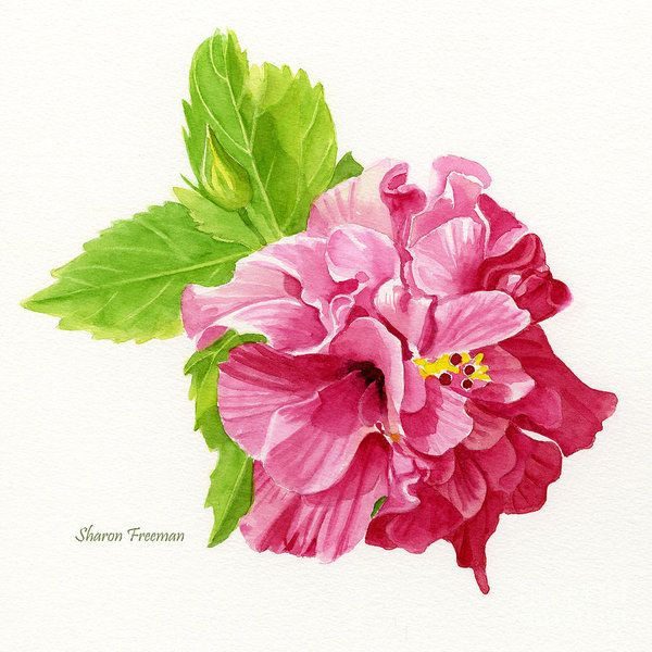 Hibiscus Art Print featuring the painting Hibiscus Rosa-sinensis by Sharon Freeman