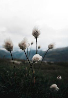 Jona Granath - MARSHMALLOWS. Mountain flowers.