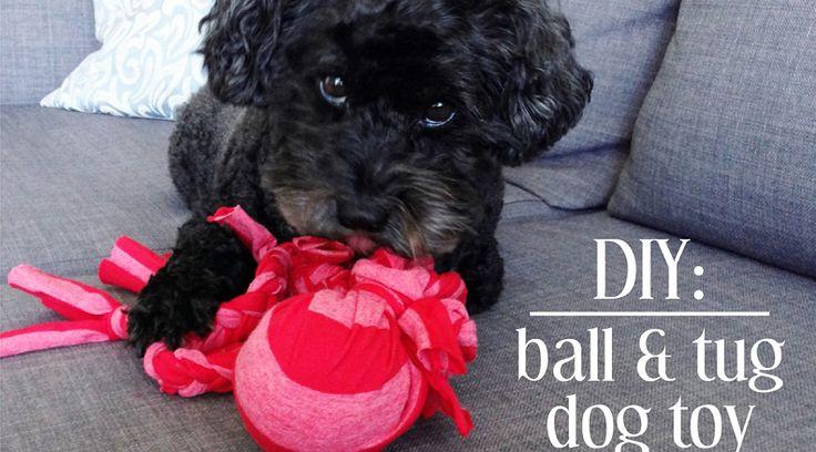 Les 25 meilleures id es de la cat gorie jouets pour chiens for Petite maison pour chien