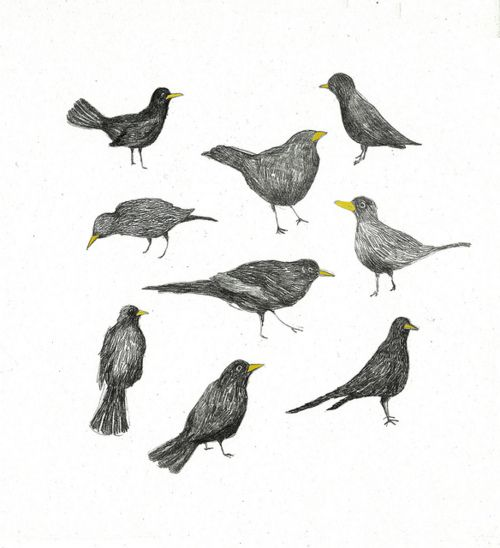 Maria-Elina - bird drawings