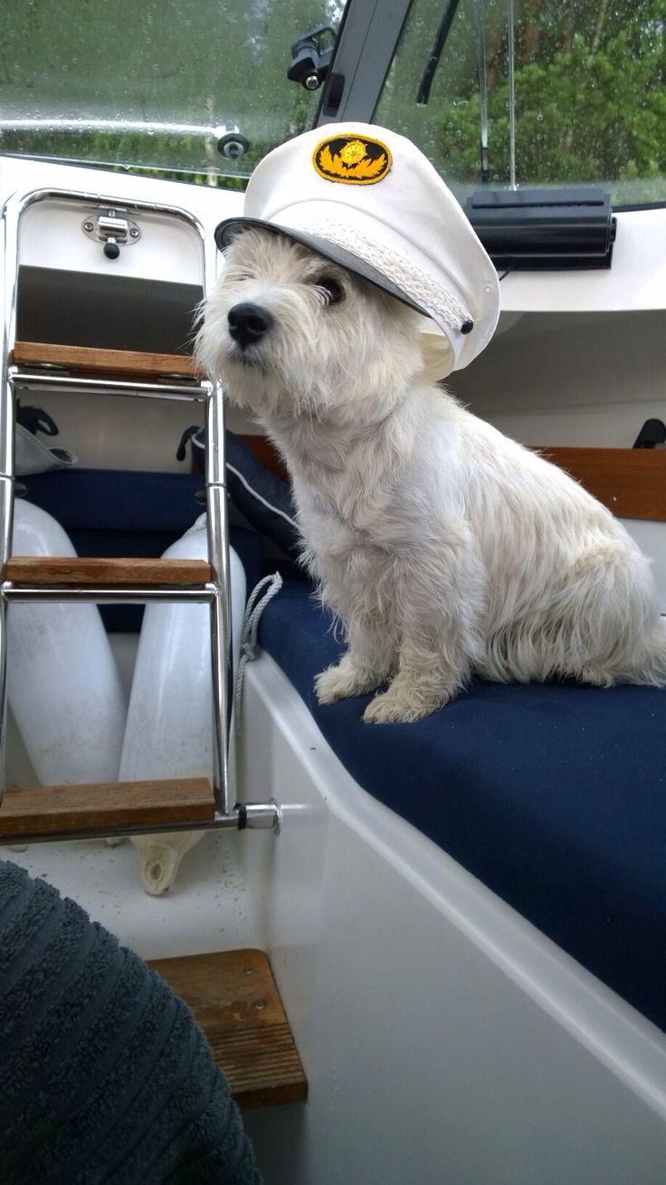 Nautical Themes… Dog Days