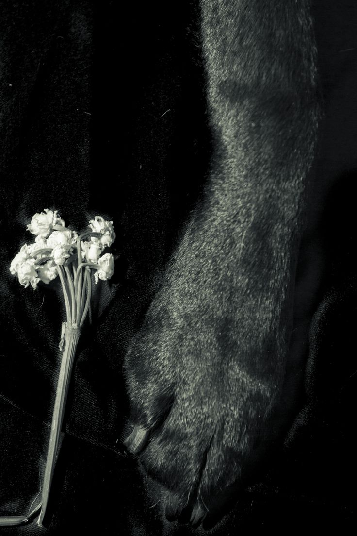 After discussing in class of the symbolism of the 'black dog' reflecting depression, i want to play on this concept,  if I show a black dog in my series it will raise questions and also will subtilely provide an answer. her a broken flower lays next to a black dog's paw suggesting the depressions has broken the beauty,, i think this direction go thought, however i want to change the death of find within my series and so far it has all been on the same level.