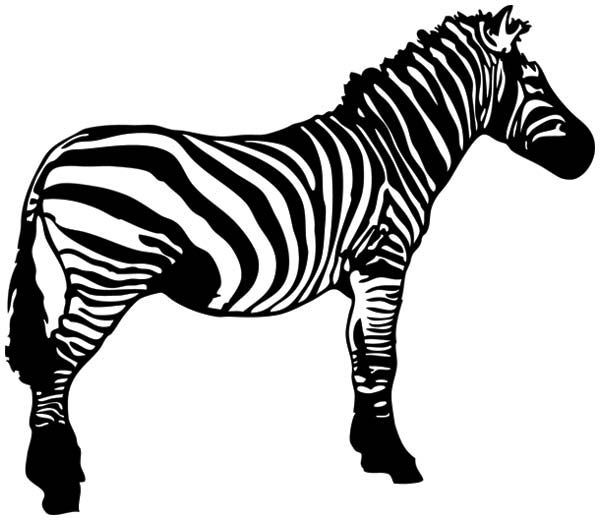 Zebra black and white clipart