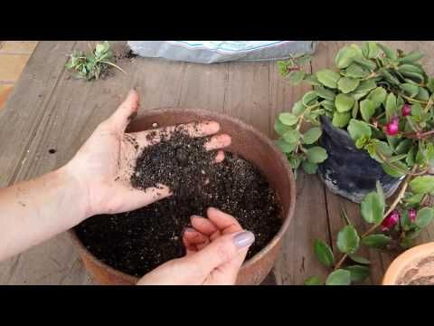 DIY: Super substrato para suculentas - ideal para iniciantes - YouTube