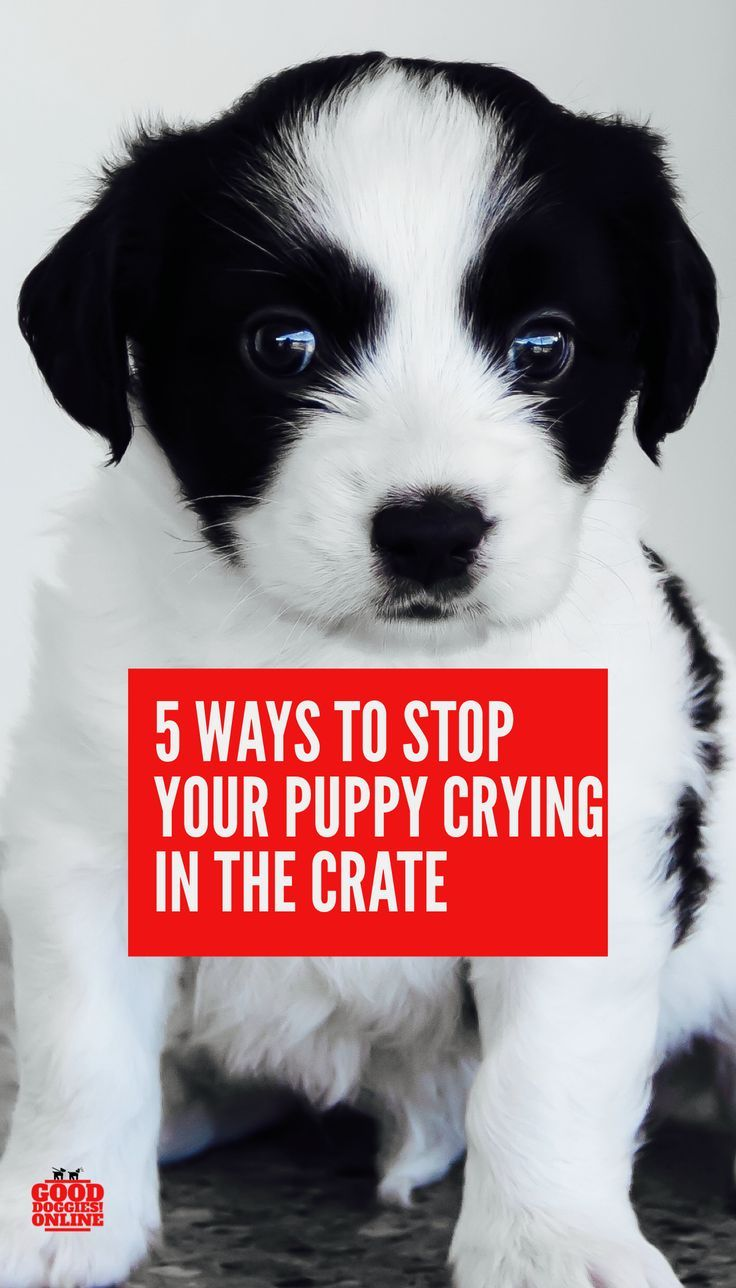 5 Ways To Stop Your Puppy From Crying In Crate Dog Care Puppies