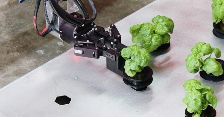 Iron Ox Brings Robotics to Hydroponic Greenhouse Farming