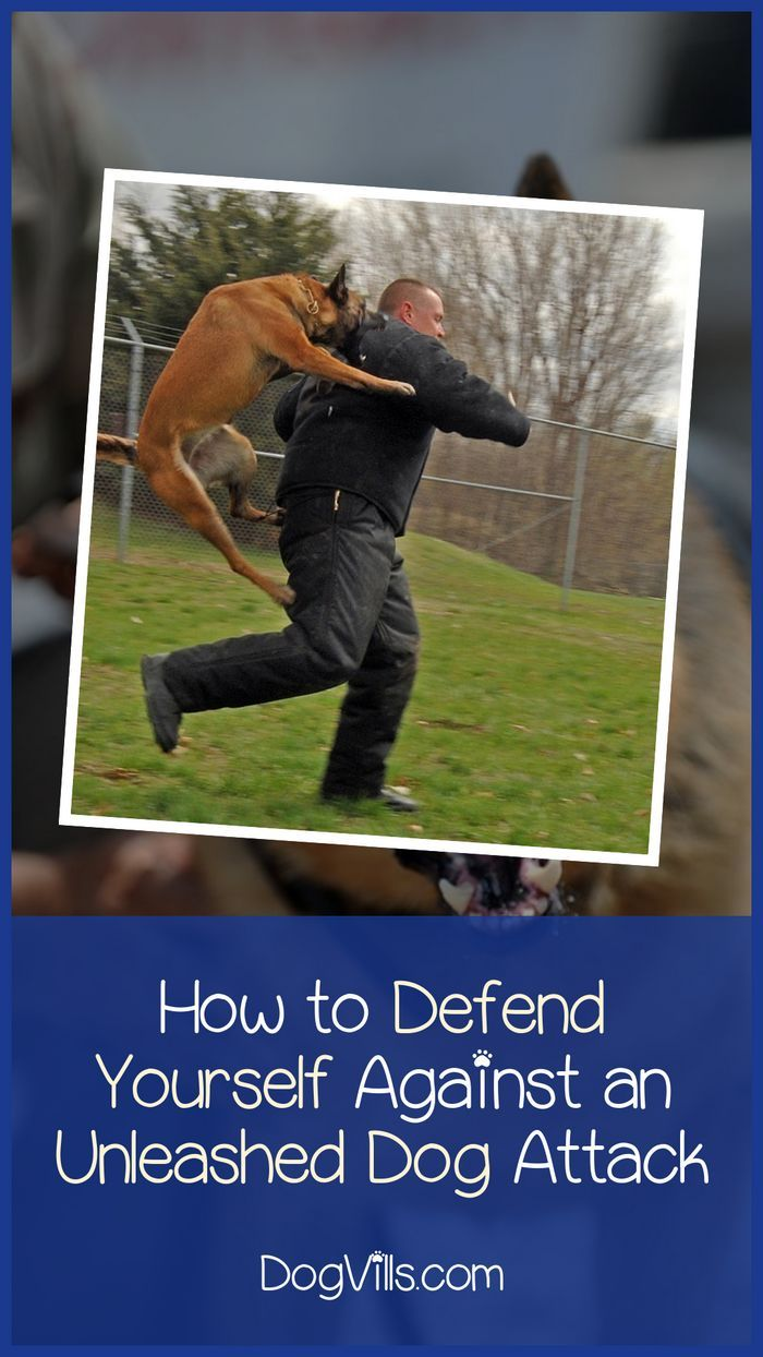 How To Defend Yourself Against An Unleashed Charging Dog How To