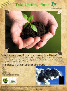 Why Plant? Find out here...