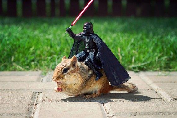 Un écureuil joue avec des figurines Star Wars 02
