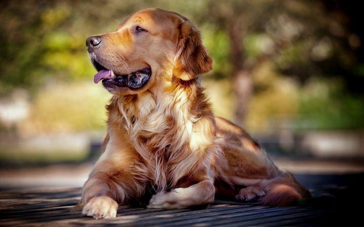 #¿Cómo afecta el sol a la piel de las mascotas? - Su Médico: Su Médico ¿Cómo afecta el sol a la piel de las mascotas? Su Médico Exponerse…
